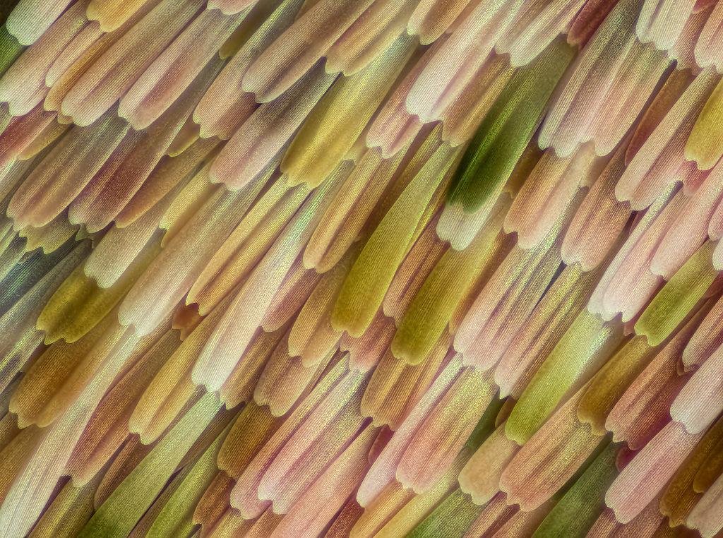 ol-77-oleander-140B-1-30-2led-1kl.jpg